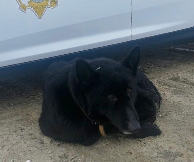 В Кузбассе собака заблудилась и пришла за помощью к полицейским