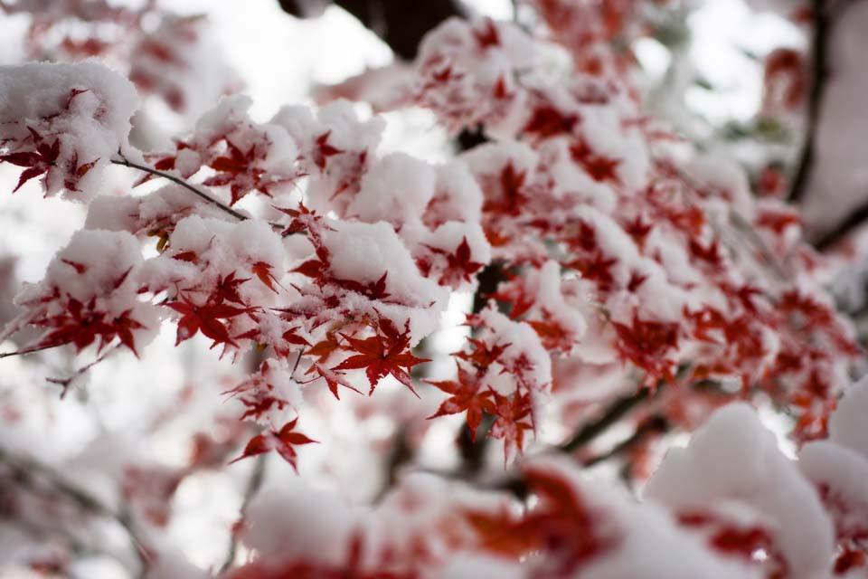 Ждать ли морозов на Крещение: прогноз погоды на неделю