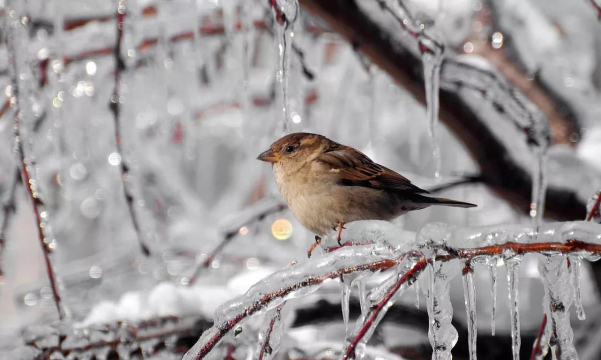 Синоптики: эта неделя будет теплой, а затем ждем морозы