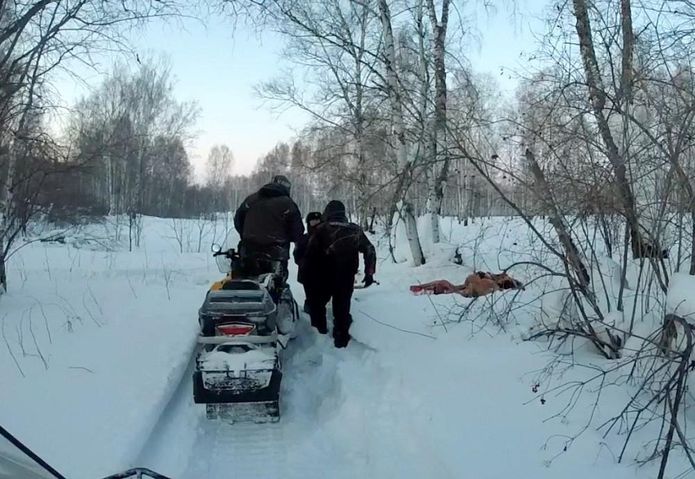 В Кузбассе браконьеры убили стельную лосиху